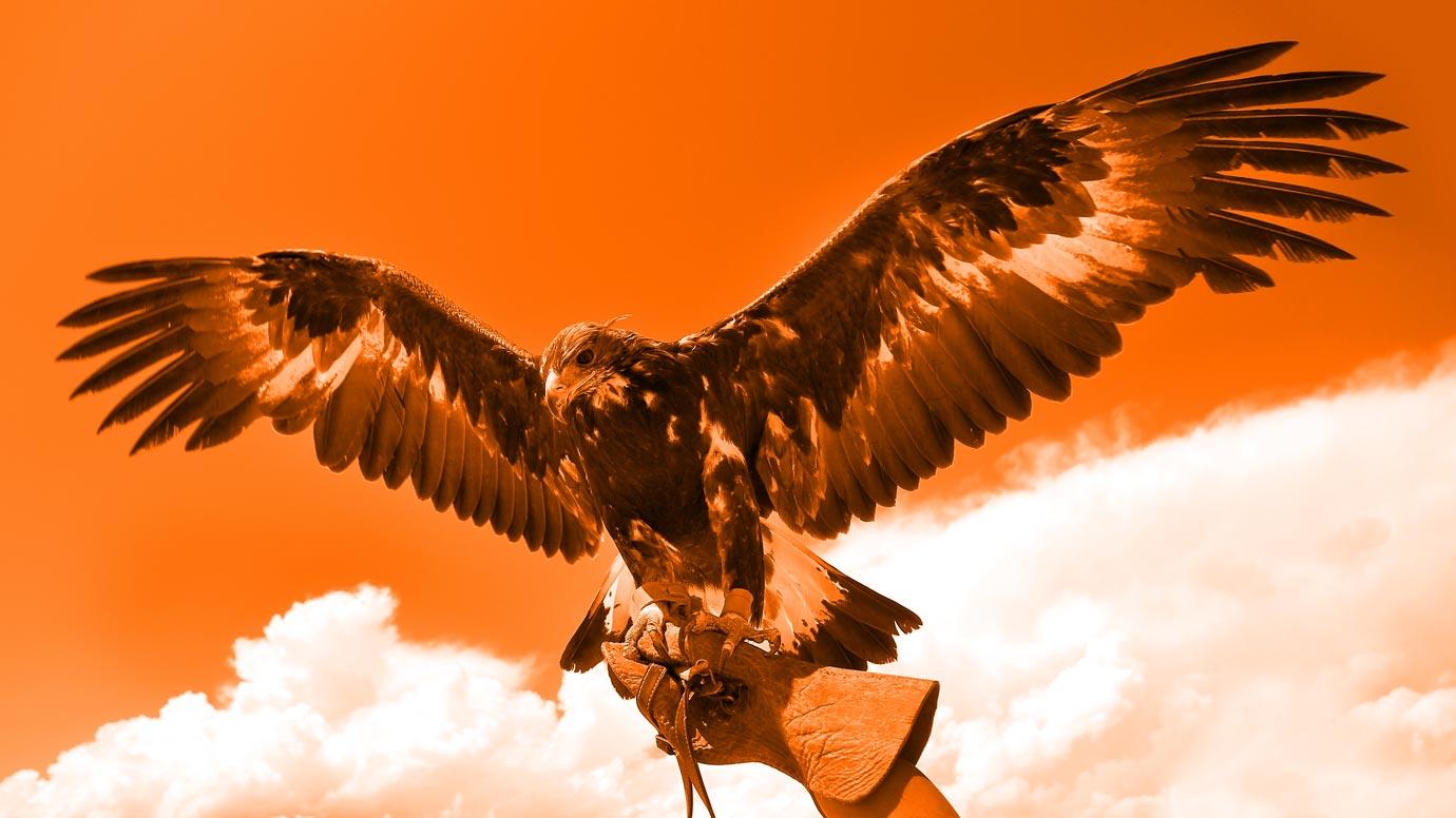 Gigamon Hawk